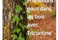 Heure du conte   Promenons-nous dans les bois   Mercredi 28 octobre 15h30   Médiathèque