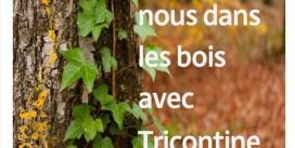 Heure du conte | Promenons-nous dans les bois | Mercredi 28 octobre 15h30 | Médiathèque