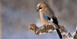 Berceuse pour l'oiseau poète | Jeudi 1er décembre 19h | Pont des Arts