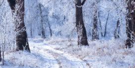 Contes d'hiver | Vendredi 2 décembre 20h | Pont des Arts