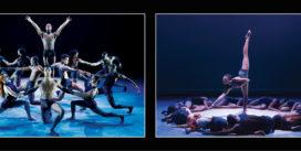 Deux grandes compagnies de danse | Jeudis 17 Janvier et 7 Février