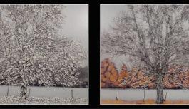 Émergence #5 | A partir du 10 Décembre | Galerie Pictura