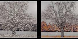 Émergence #5   A partir du 10 Décembre   Galerie Pictura